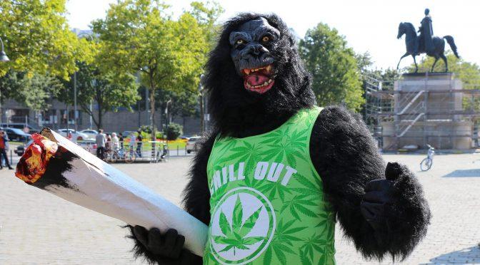 Cannabis legalisieren – das Aktivistenproblem