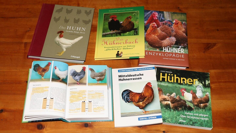 Das eigentliche Geld verdienen Legalize Aktivisten z.B. mit Infotexten zur Hühnerzucht
