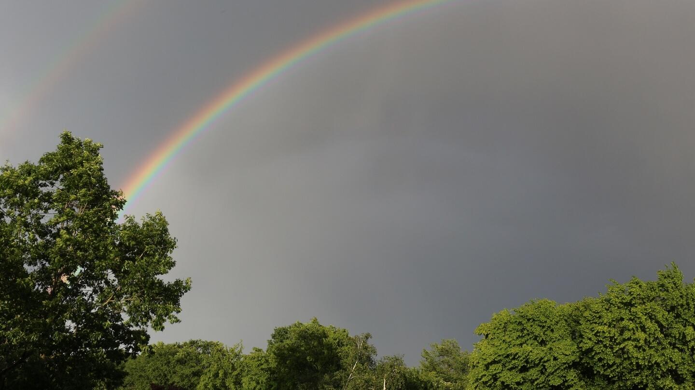 Beim Freiheitskampf ums Kraut im Regen stehen? Es folgt Sonnenschein!
