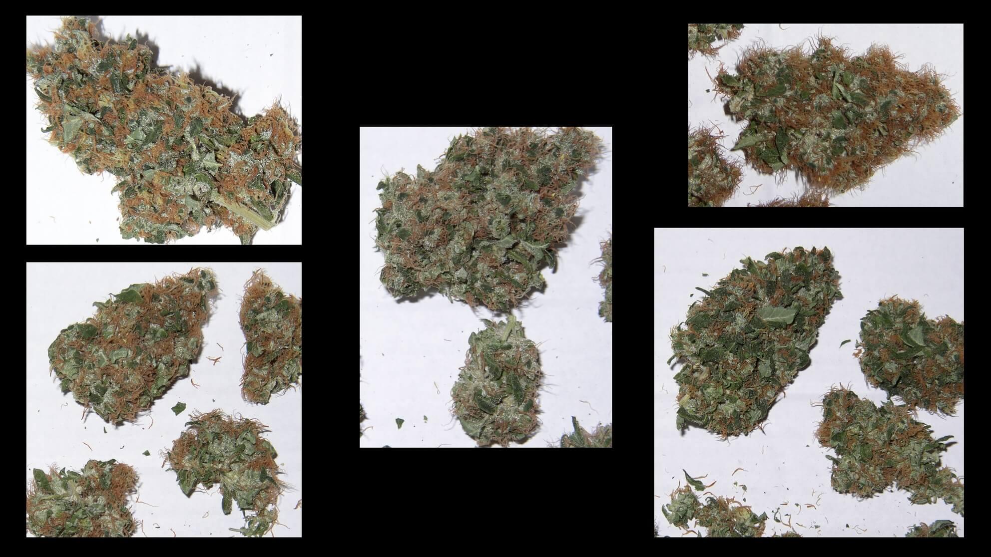 Marihuanablüten: Israelis erforschen, welche Cannabissorte bei welchem Krebs besser hilft