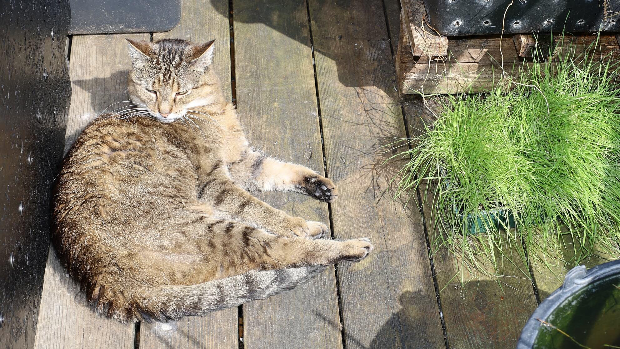 Auf dem Katzenbalkon: goldener Herbst für die kranke Katze Dgani – ihr CBD wirkt!