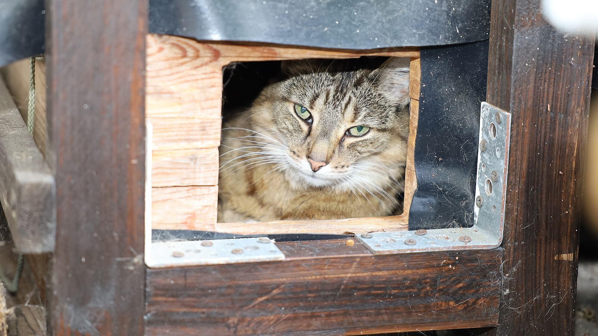 Kranke Katze im Katzenbunker auf dem Katzenbalkon – geht es ihr gut, kann sie noch alt werden