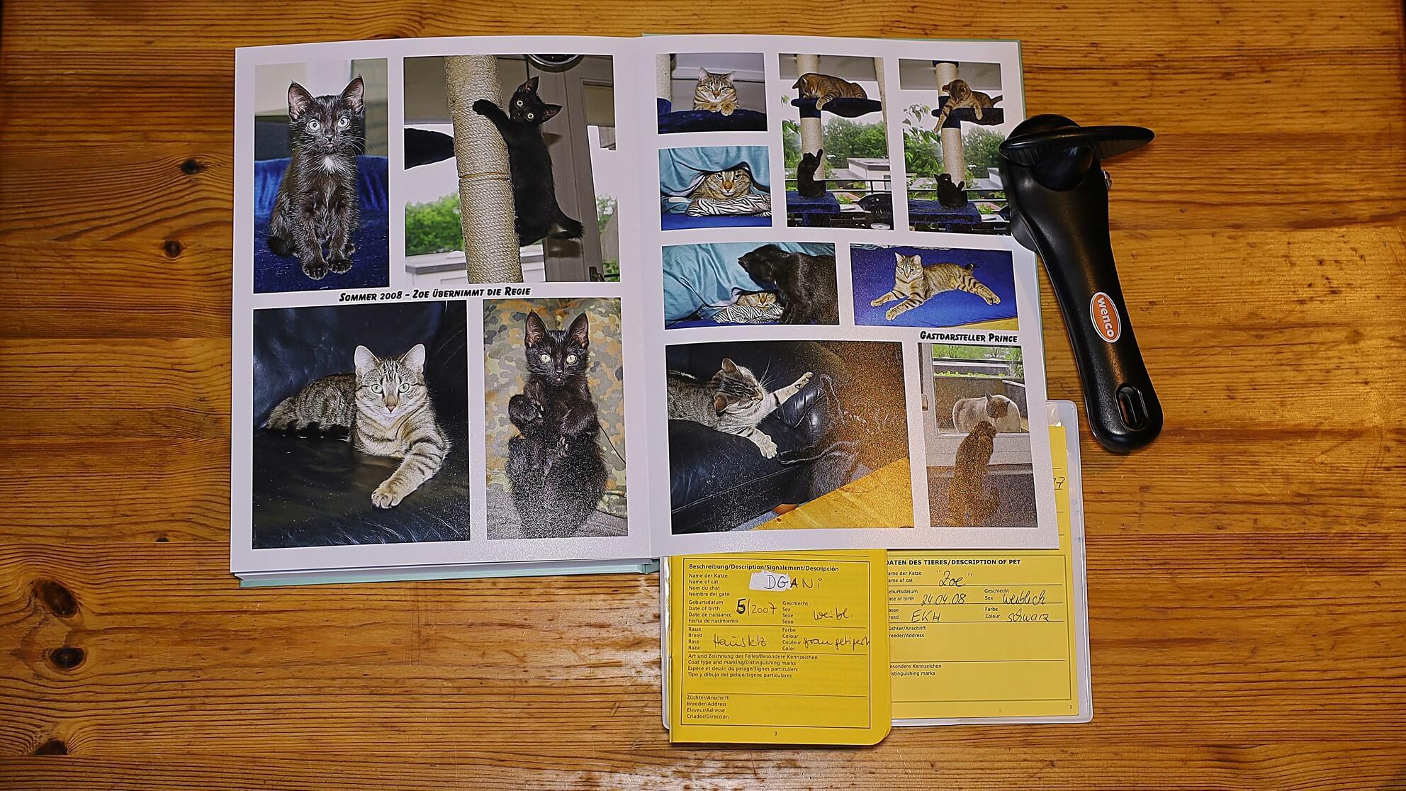 Katzenfotos – was bleibt einem Dosenöffner sonst, wenn seine Katzen ihn nicht überleben?