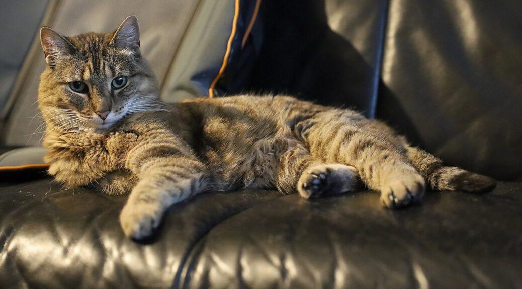 Kranke Katze im Bild – sie erhält CBD gegen Gastritis und Altersleiden
